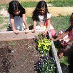 Planting-flowers-in-preschool-garden-Raleigh